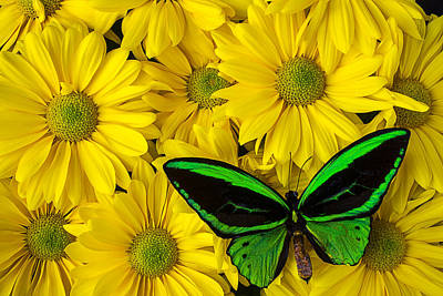Green Butterfly Resting Poster