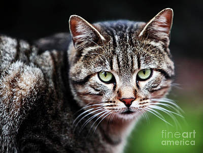 Green Cat Eyes Poster