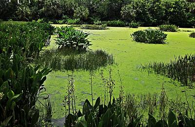 Green Cay Wetlands Poster by MTBobbins Photography