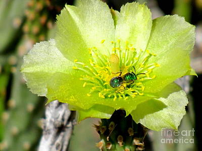Green Cholla Beauty Poster by Marilyn Smith