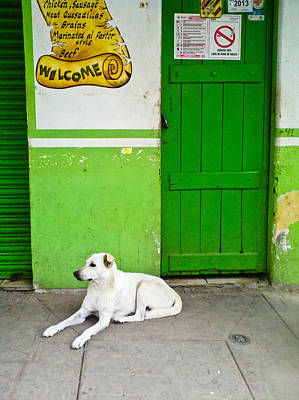 Green Door Lazy White Dog  Poster by Calvin Hanson