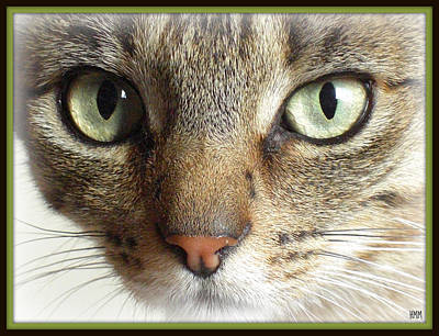 Green Eyed Cat Face Poster
