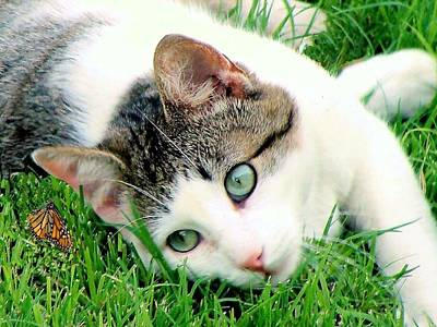 Poster featuring the photograph Green Eyed Cat by Janette Boyd