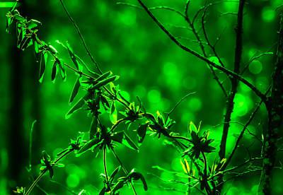 Green Fantasy Poster by J Riley Johnson