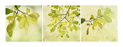 Green Foliage Triptychon Poster by Priska Wettstein