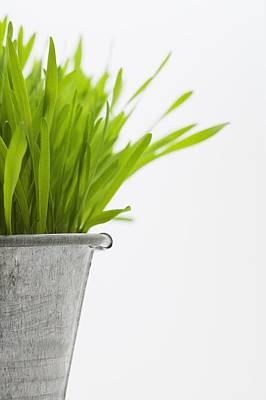 Green Grass In A Pot Poster by Steven Raniszewski