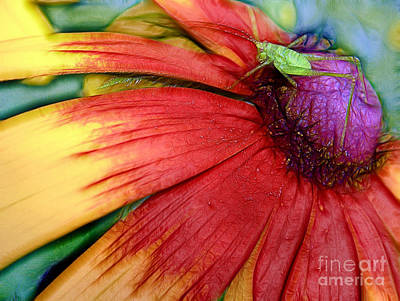 Green Grasshopper On A Pink Flower Poster by Odon Czintos