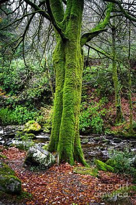 Green Green Moss Poster