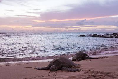 Green Hawaiian Sea Turtles At Sunset - Oahu Hawaii Poster