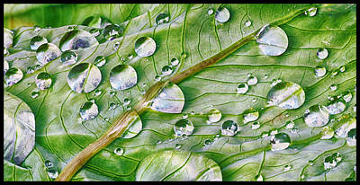 Green Leaf And Rain Drops Poster