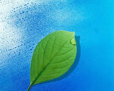 Green Leaf Floating Above Streaked Poster
