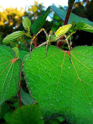Poster featuring the photograph Green Lynx Spider 002 by Chris Mercer