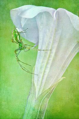 Green Lynx Spider Poster by Robert Jensen