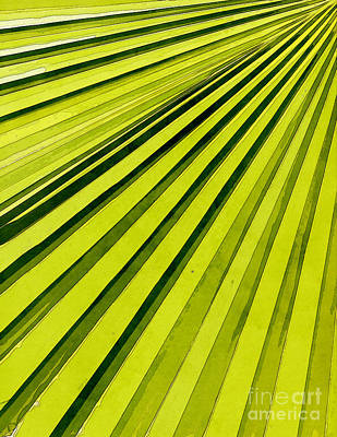 Green Palm Frond Poster by Phil Perkins