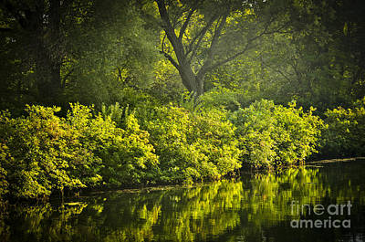 Green Reflections In Water Poster by Elena Elisseeva