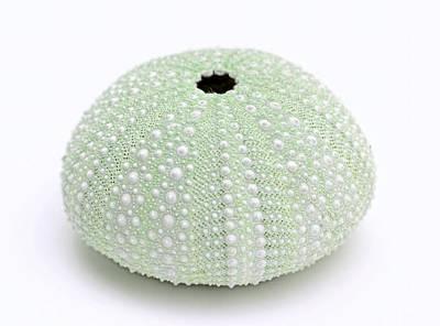 Green Sea Urchin White Poster