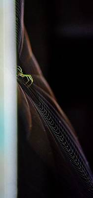 Green Spider Poster