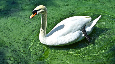 Green Swan Poster