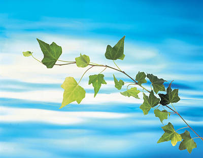 Green Vine Floating In Blue Water Poster