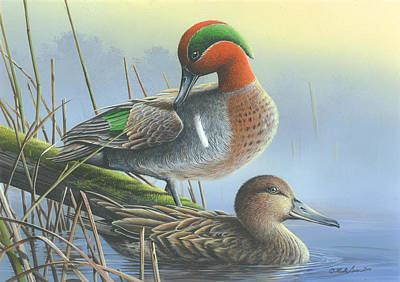 Green-winged Teal Ducks Poster