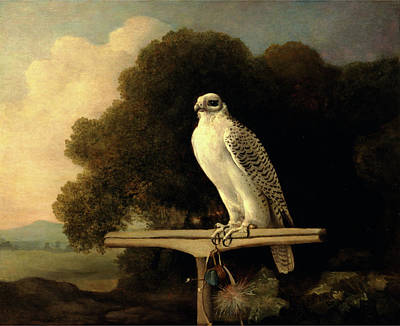Greenland Falcon Gyr Falcon Signed And Dated Poster by Litz Collection