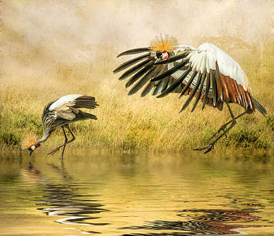 Poster featuring the photograph Grey Crowned Cranes by Brian Tarr