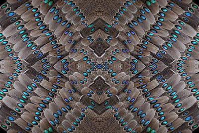Grey Peacock Tail Feathers Design Poster by Darrell Gulin