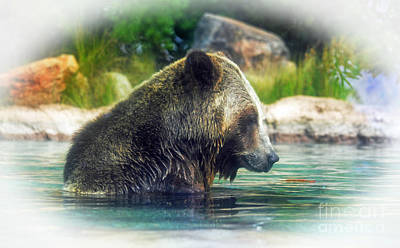 Grizzly Bear Enjoying A Dip In The Water Fade To White Version Poster by Jim Fitzpatrick