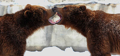Poster featuring the photograph Grizzly Bears Facing Off by Jerome Lynch