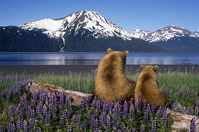Grizzly Sow & Cub Sit On Log & View Poster