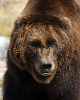 Poster featuring the photograph Grizzly by Steve McKinzie
