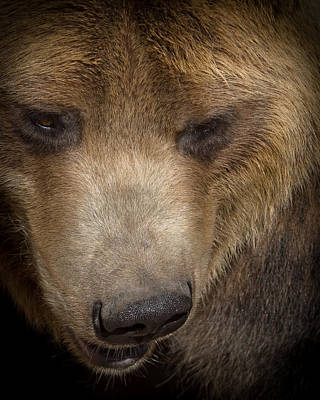 Grizzly Upclose Poster by Ernie Echols