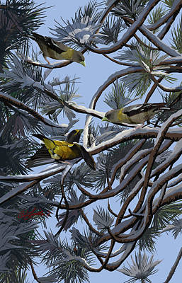 Grosbeaks On Tree Limbs Poster