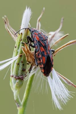 Ground Bug Poster