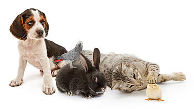 Group Of Common Household Pets Poster