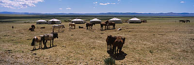 Group Of Horses And Yurts In A Field Poster by Panoramic Images