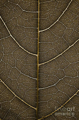 Poster featuring the photograph Grunge Leaf Detail by Carsten Reisinger