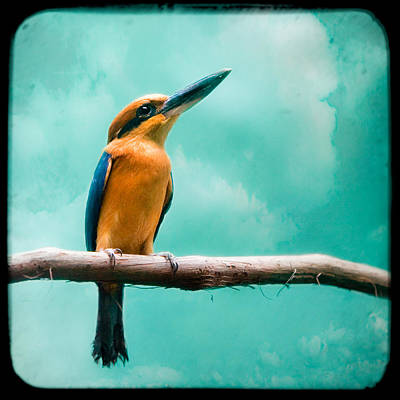 Poster featuring the photograph Guam Kingfisher - Exotic Birds by Gary Heller