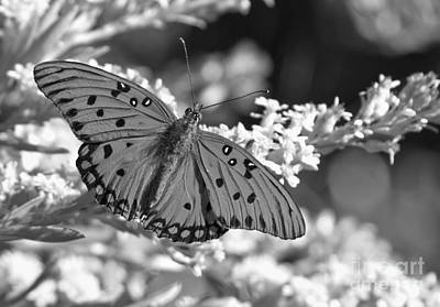 Gulf Fritillary Black And White Poster by Adam Jewell
