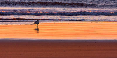 Gull And Sunrise Surf Poster by Jeff Sinon