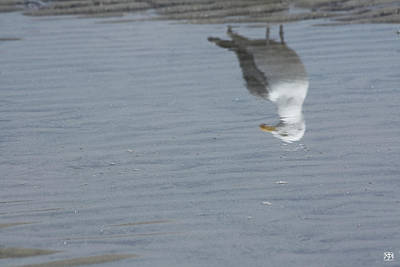 Gull At The Beach Poster