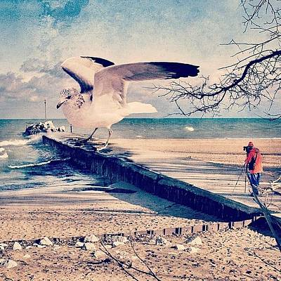 #gull #beautiful #bird #seagull #water Poster