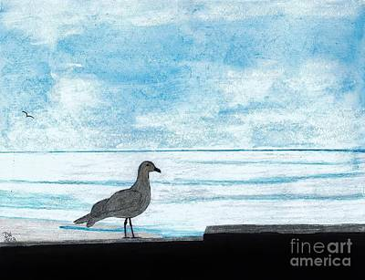 Seagull - By The - Sea Poster by D Hackett