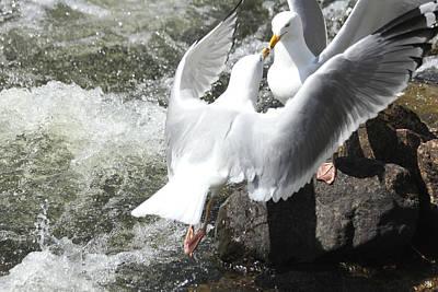 Gull Greeting Poster