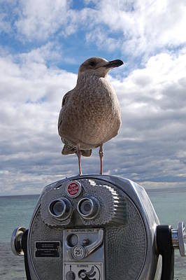 Poster featuring the photograph Gull by Mim White