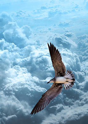 Gull On Teal Clouds  Poster by Bill Tiepelman