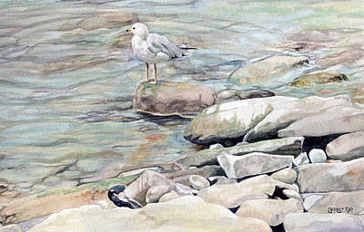 Gull On The Rocks Poster