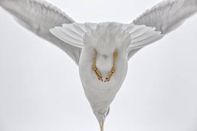 Gulls Flight Poster