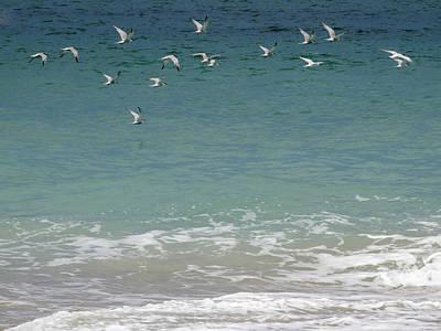 Gulls Flying Over The Ocean Poster