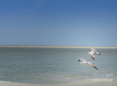 Poster featuring the photograph Gulls In Flight by Erika Weber